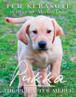 Pukka : The Pup after Merle